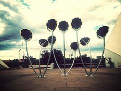 Nine Solar Flowers