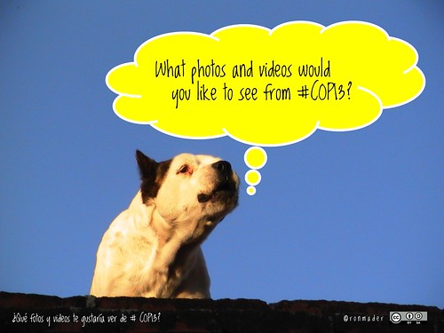 What photos and videos would you like to see from #COP13? ¿Qué fotos y videos te gustaría ver de #COP13? #roofdog @CBDNews @COP13MX @RioPavilion @IUCN_CEC @IUCN @IUCNTourism