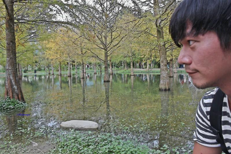 花蓮-台九線秘境-壽豐鄉落羽松-17docintaipei (2)