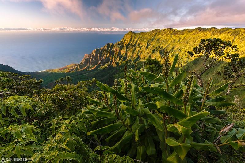 Pihea Vista - Kauai