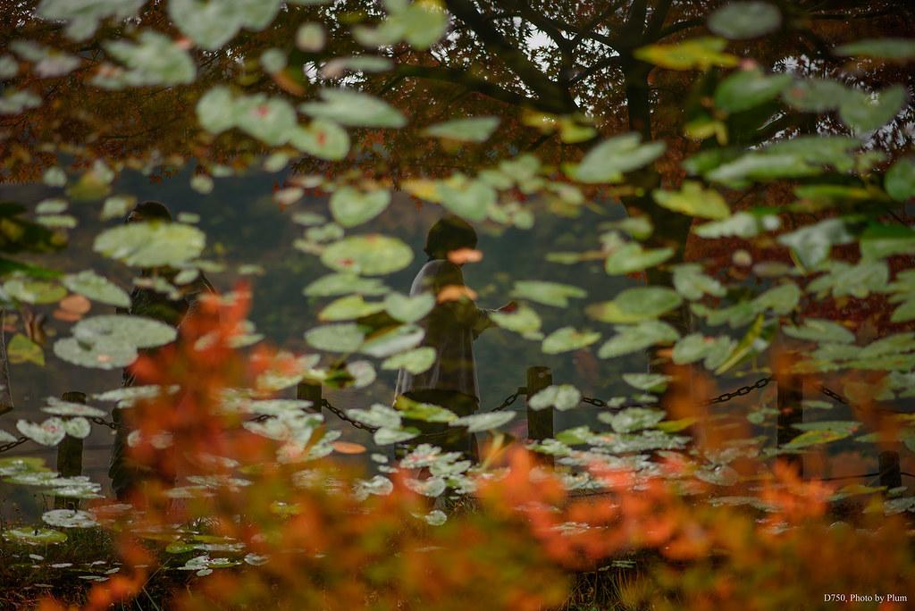 モネの池に紅葉を見る