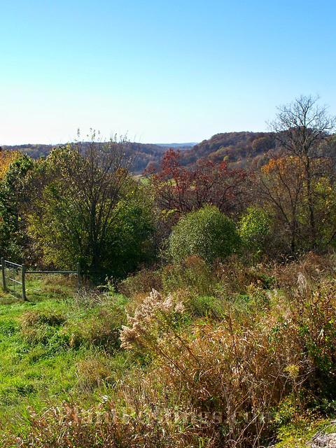 oakwood view