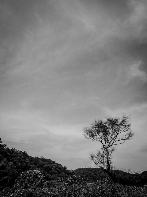 Gulugod baboy + Portales Island-3