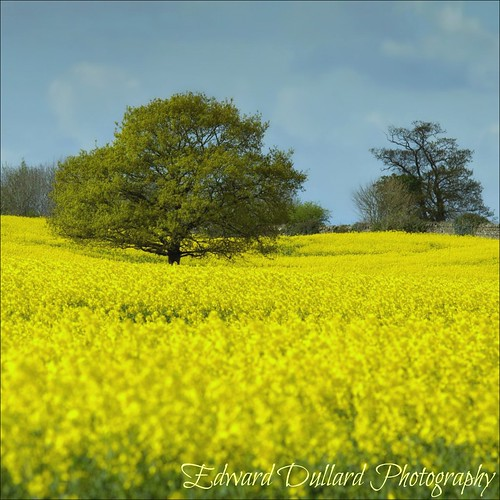 The colour yellow. | by Edward Dullard Photography. Kilkenny, Ireland.