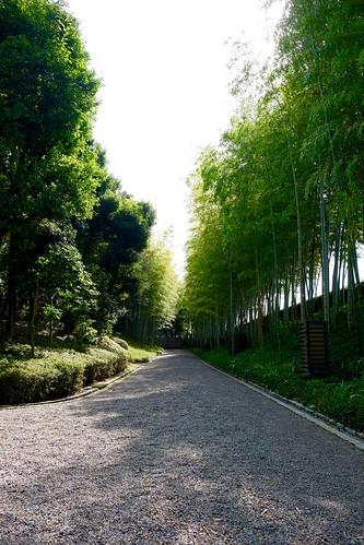花田苑 竹林