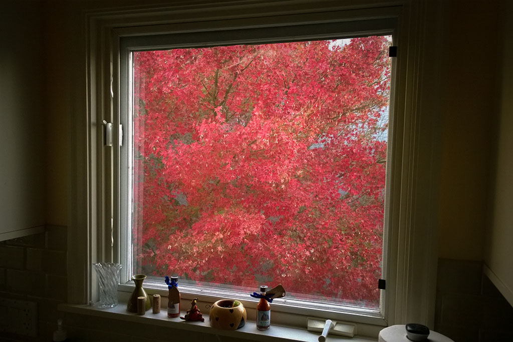 20161110_Fall_Window