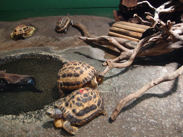 Visit ROAM THE GNOME Family Travel Directory for MORE SUPER DOOPER FUN ideas for family-friendly travel around the world. Search by City. Photo - Japan Aquarium - Turtles