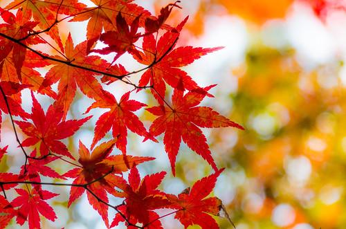 紅葉狩り - 東山公園 20