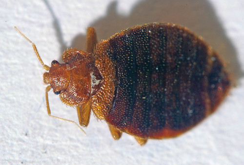 Reduce Bed Bug Bite Swelling