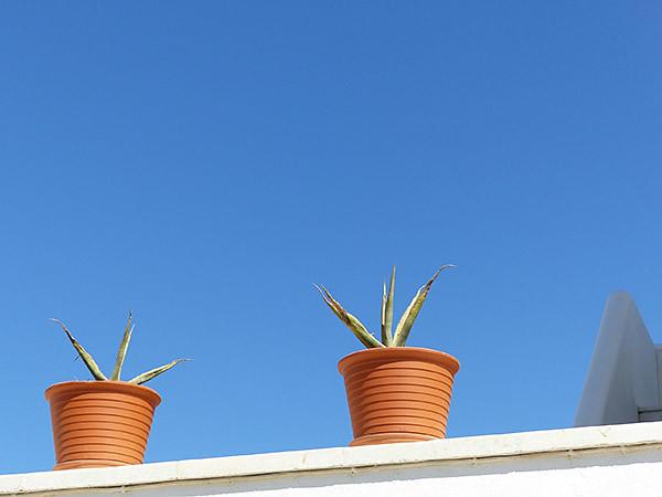 pot et cactus