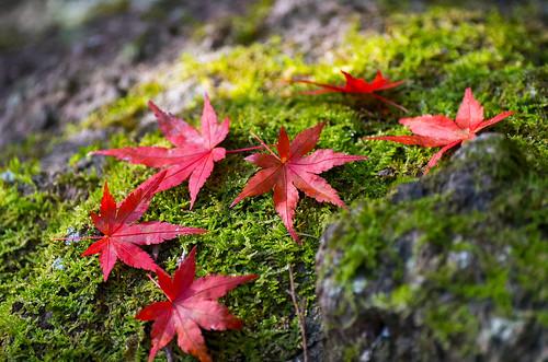 紅葉狩り - 東山公園 21