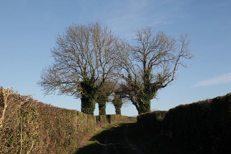 Walks: South Downs Way