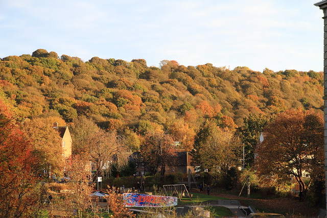 Walker Wood/Midgeley Wood, Baildon