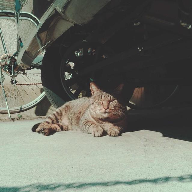 Tabby cat hiding under car