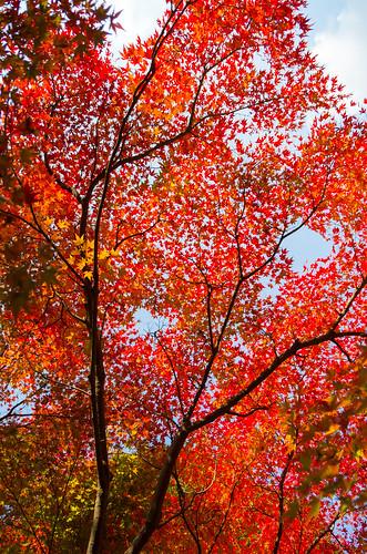 紅葉狩り - 東山公園 13