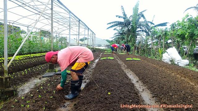 Filipino-farmers