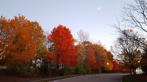 Fall foliage - Franklin, MA 2016