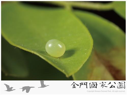 木蜂天蛾-04