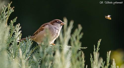 Es vögelt in meinem Garten! - Seite 2 30868484621_4ca040a1df