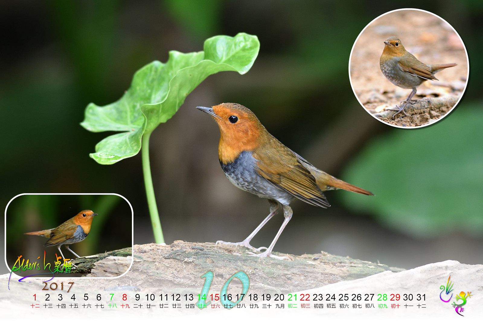 Calendar_03alder_10