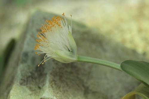 六甲高山植物園の秋
