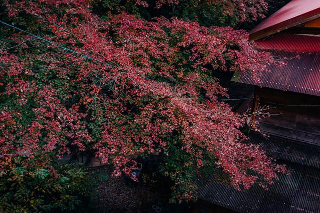Jyokoji_01