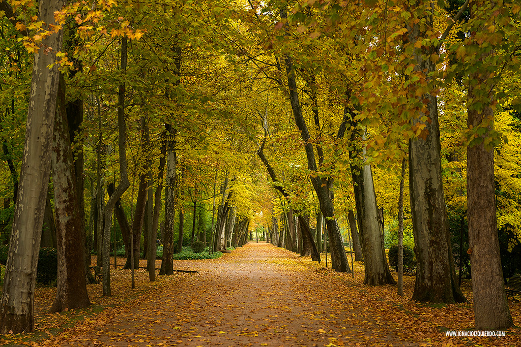 Autumn in Aranjuez 34