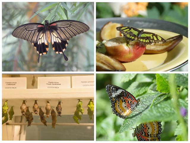 chicago day 3-butterflies