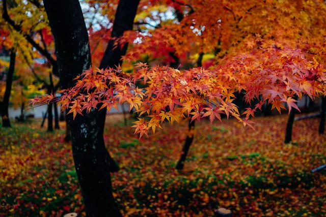 Kyoto_Eikando_02