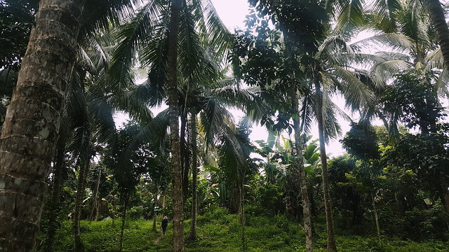 Forest Wood Garden
