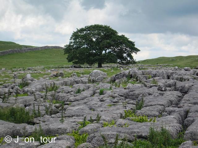 Limestone Pavement GJC_IMG_7899