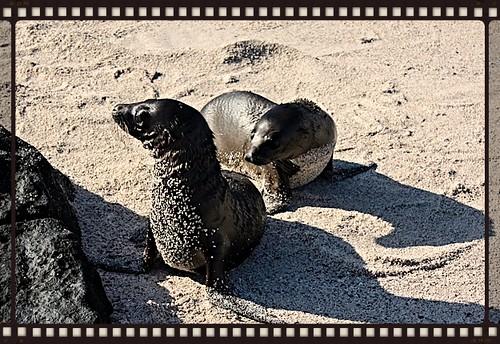 galapagos island sea lions 1