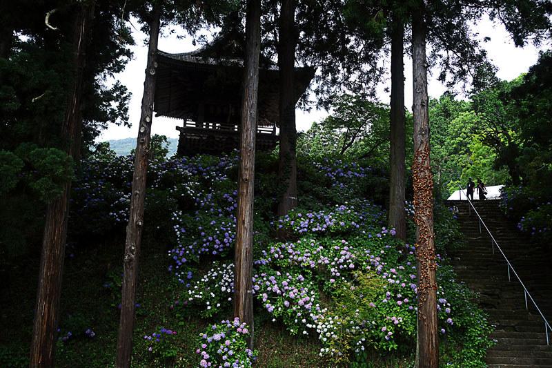 富士川町 あじさい寺、妙法寺 石段と鐘楼