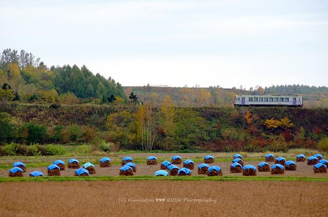 豆ニオがある昼間の鉄道風景
