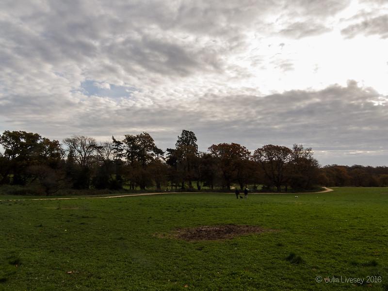 Looking across to Grove Wood