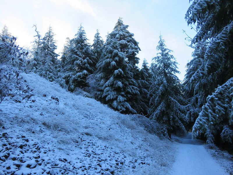 Snowy trees on Dimple Hill