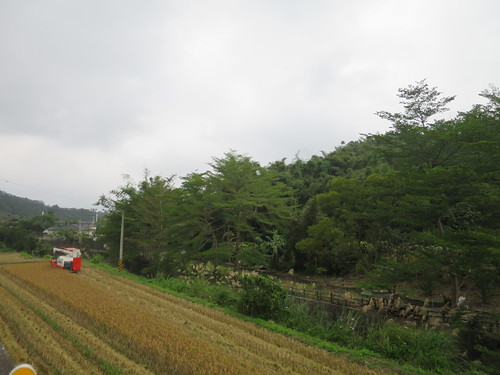 IMG_5524