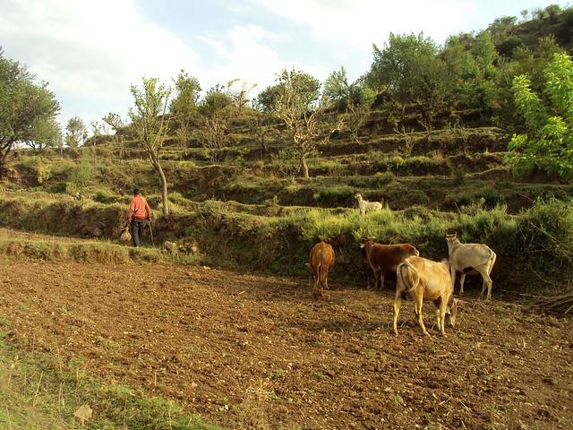 रामजीवाला गाँव का दृश्य