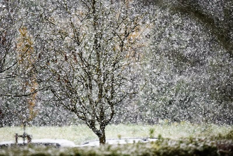 Snow 07.11 (4)