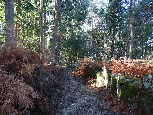 Camino en Porto do Son