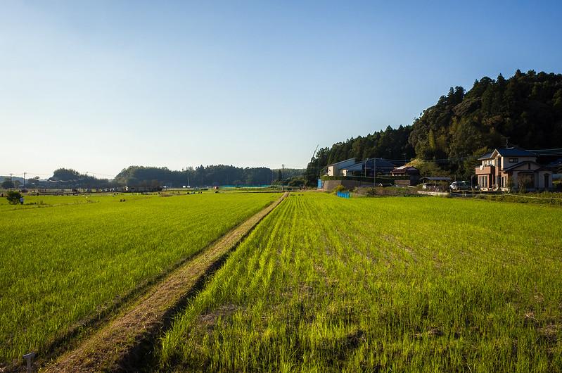 Narita's landscape