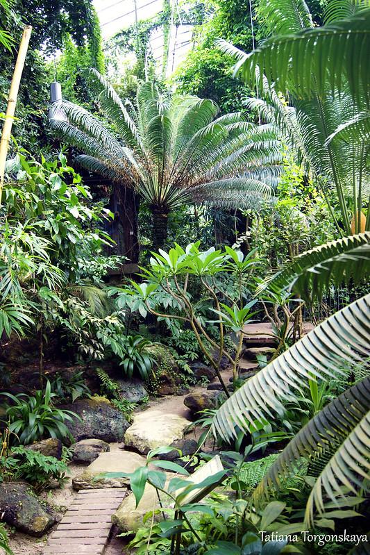 В оранжерее ботанического сада