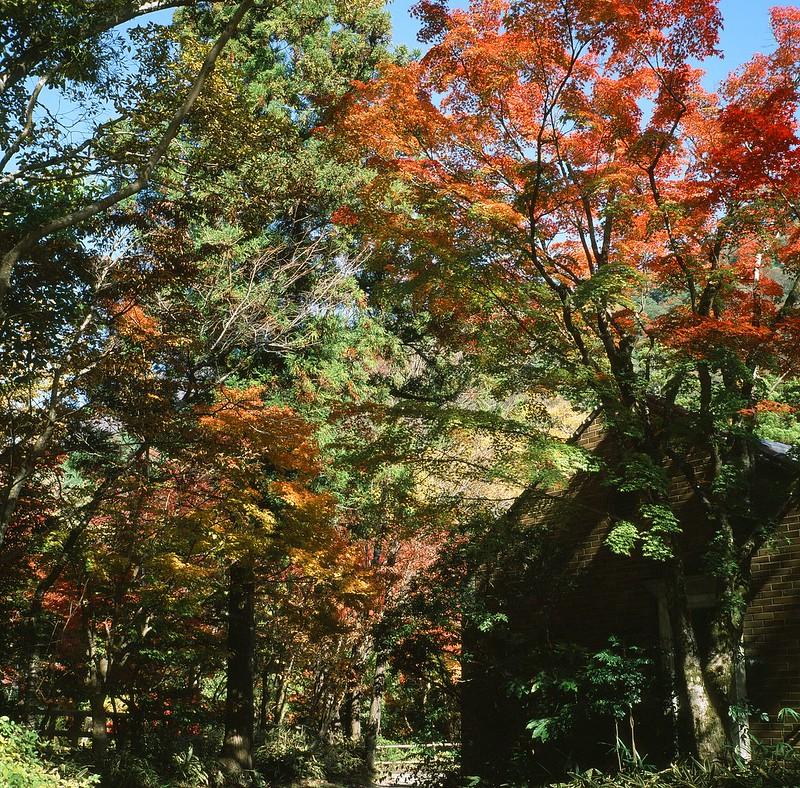 亀の井別荘|由布院