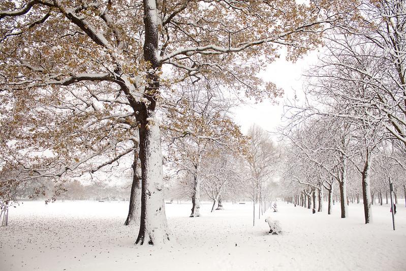 3671 Greenwich Park Snow
