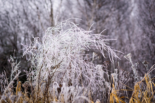 2016 11 27 Frost 012