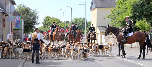 Loudeac - fete des chevals - riding with hounds
