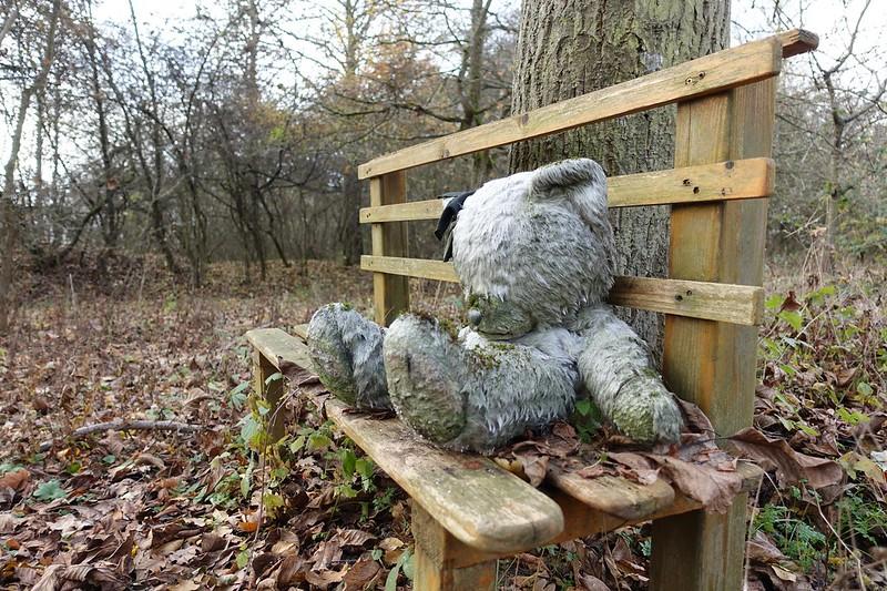 Lost in Forrest: Einsamer Bär