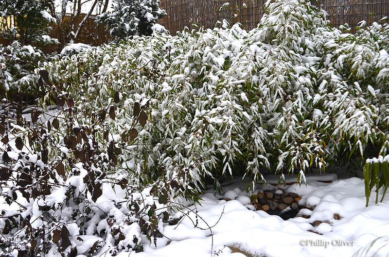 snow121516j