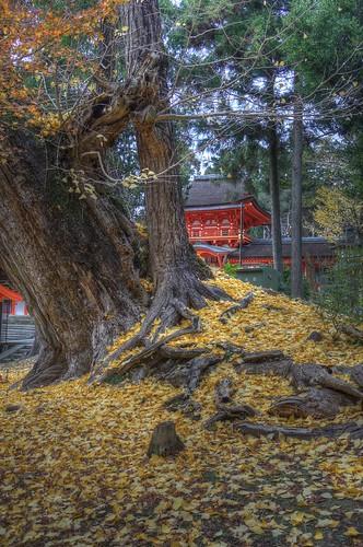 Kasuga Taisya Shrine on NOV 30, 2016 vol01 (5)