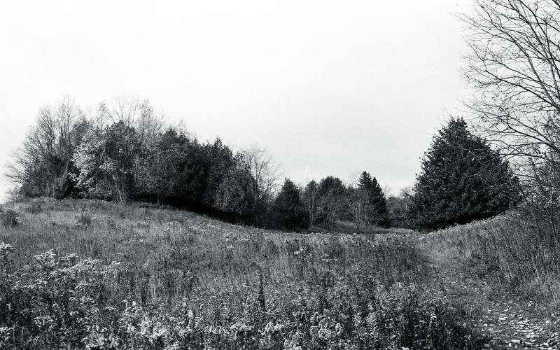 The Edge of the Meadow